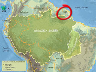 The Amazon in French Guiana