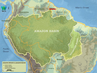 The Amazon in Guyana